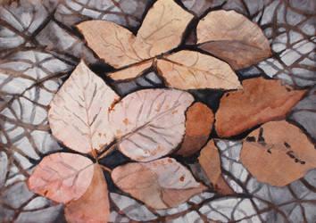 Leaf study in Tuscany by ellejayess