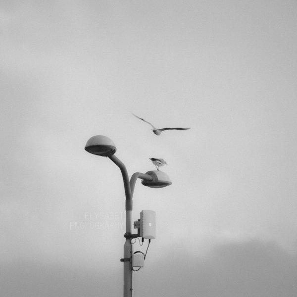 Take off by elysabet