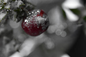 Fruit of Christmas