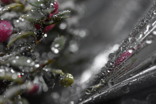 Perhaps Rain