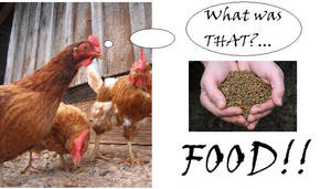 chickens...and pellets...lolz