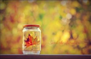 Catch the Autumn by Lenna3