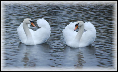 Swan Twins Framed