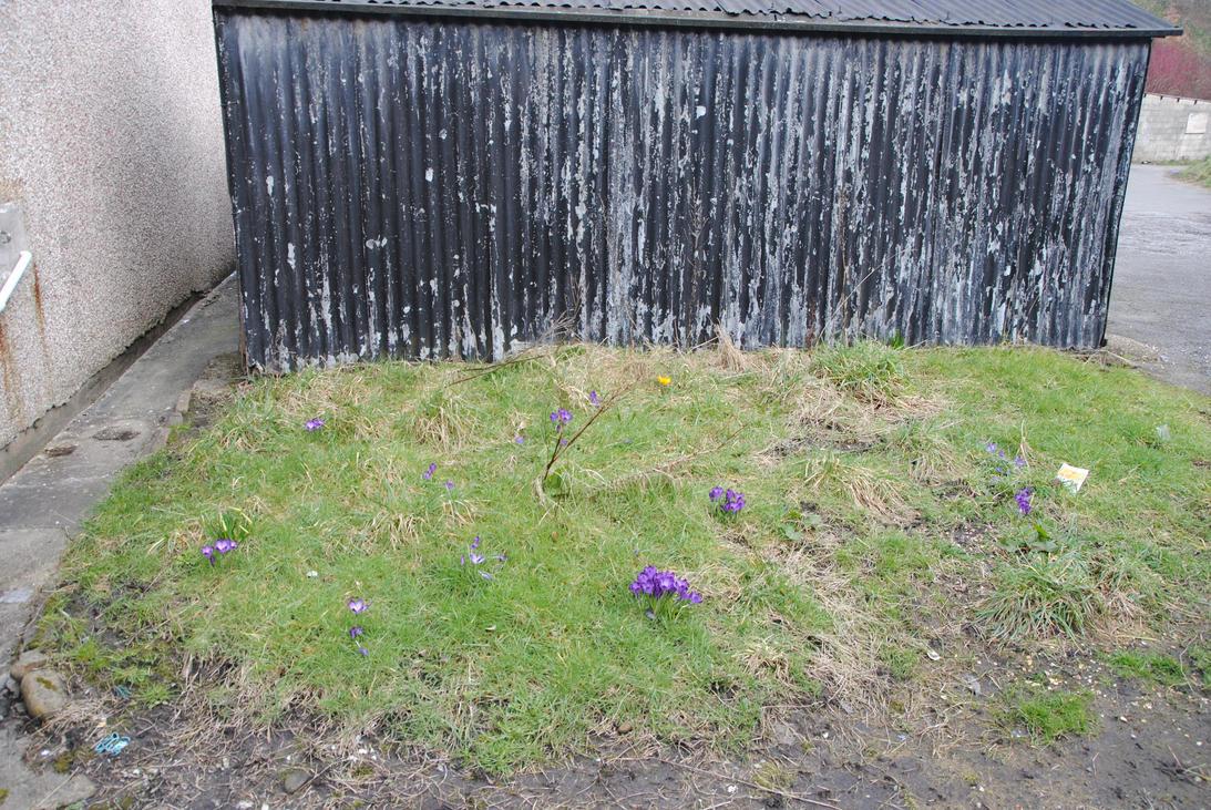 Waste Ground by taramara