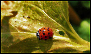 LadyBug Directions 3rd place by FixMyPic