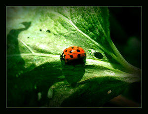LadyBug Fix 3rd place by FixMyPic
