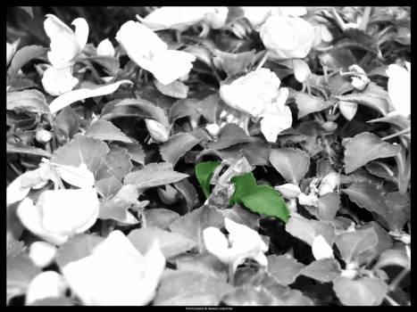 Leaf Overgrowth