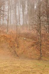 Fog II by last0winged