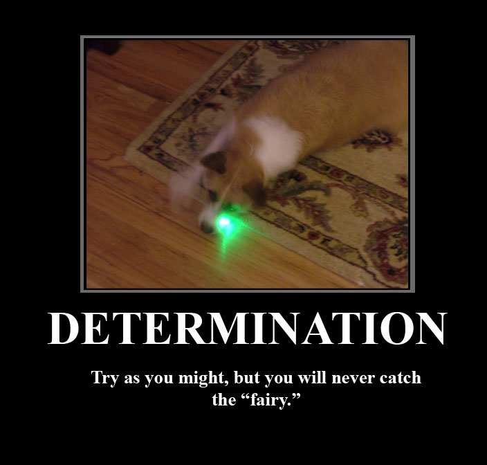 Persistence Motivational Quotes: Dog Demotivational Poster By Jared811111 On DeviantArt