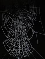 Web by Alleyn