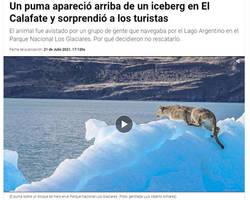 Puma on iceberg?