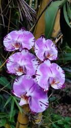 Pretty In Purple by Thalea