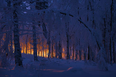 cold forest by mescamesh