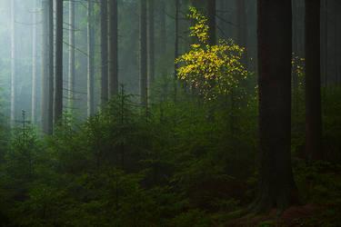 fogspot by mescamesh
