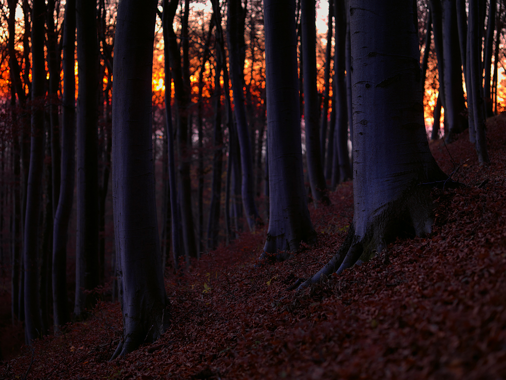 dawn in the forest by mescamesh