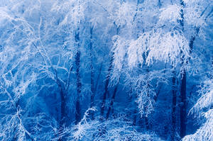 frozen forest by mescamesh