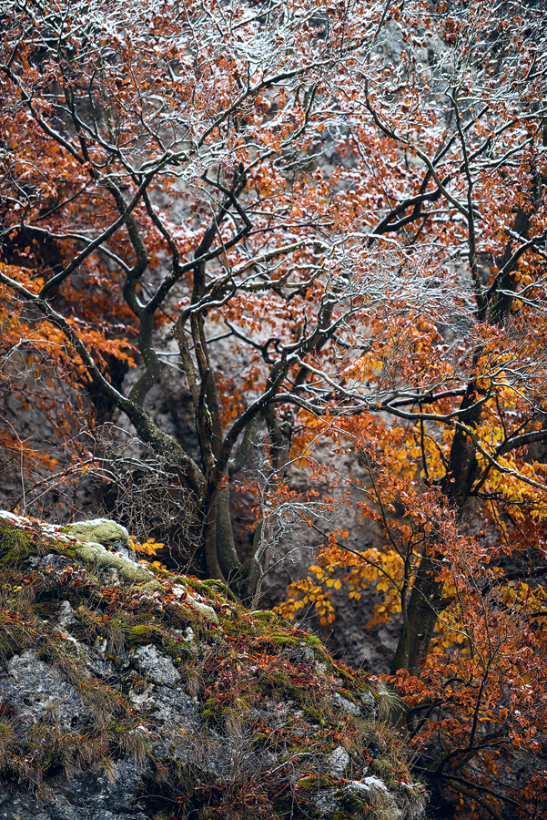sweetened autumn by mescamesh