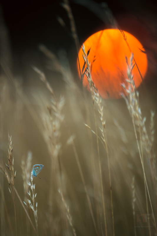 Orange - Page 3 Summer_icarus_by_mescamesh-d6hsfjb