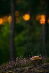 birch bolete by mescamesh
