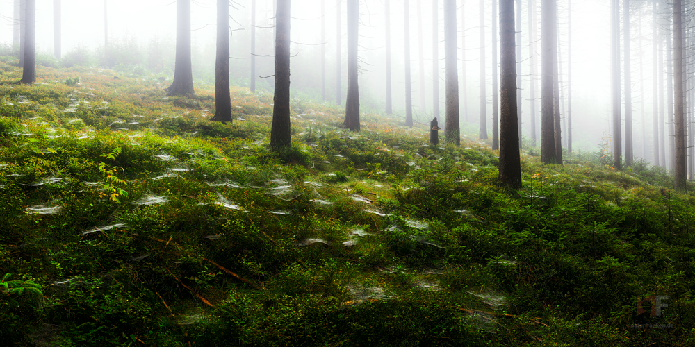 spiders forest by mescamesh