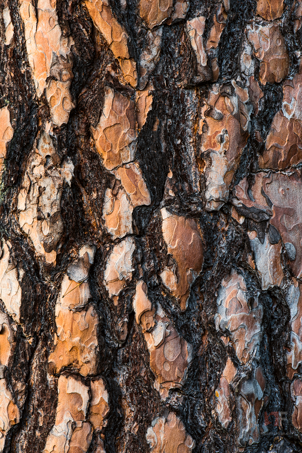 pine bark by mescamesh