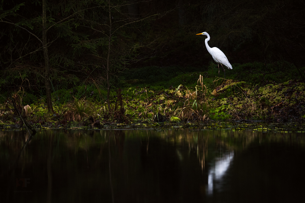 forest pond hunter by mescamesh