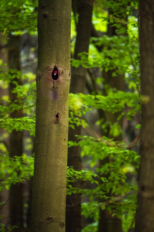 Black Woodpecker's Castle by mescamesh