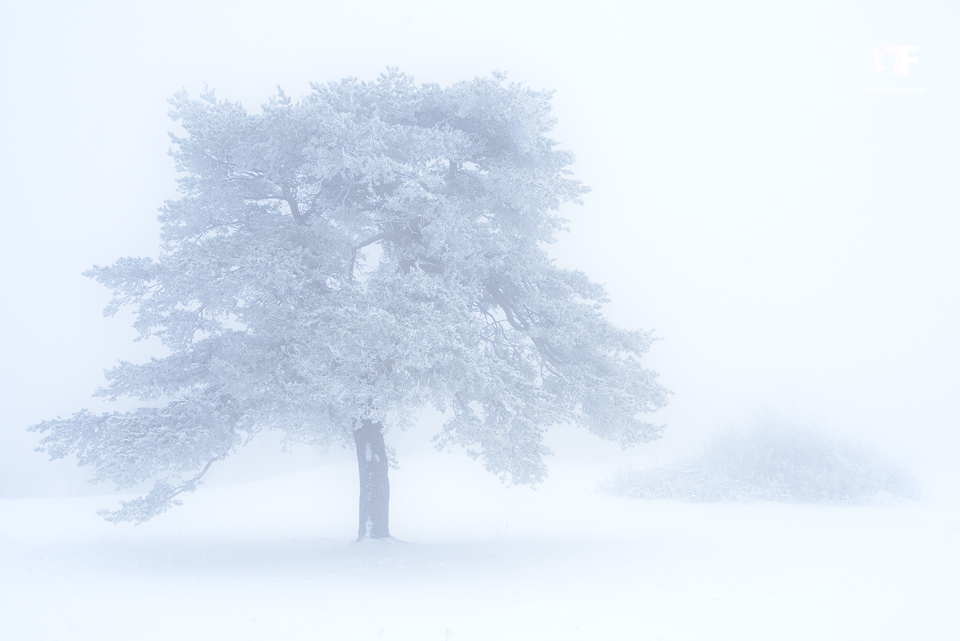 Ice Fog by mescamesh