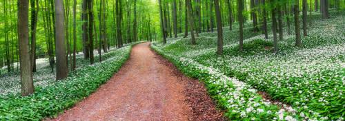 Wild garlic forest by mescamesh