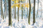 Hibernal autumn forest