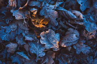 Frozen Forest Floor