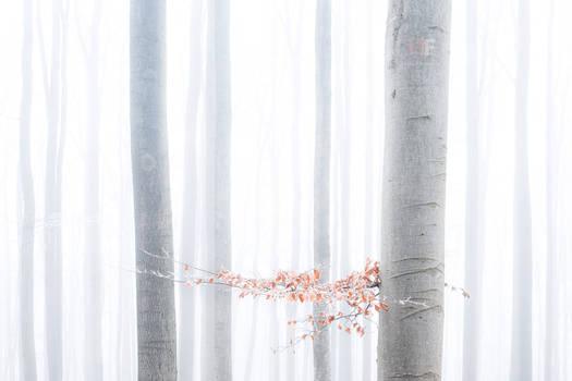 Hibernal forest