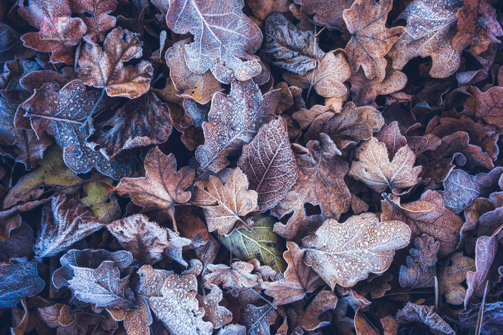 Treasure Of Leaves by mescamesh