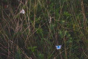 Blue Spot by mescamesh