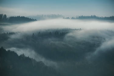 Spring Fog by mescamesh