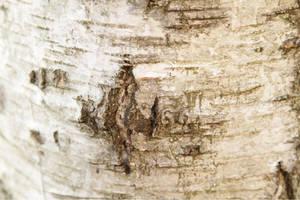 Bark Effect 0606 by w3b-doctor
