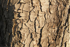 Bark Effect 0607 by w3b-doctor