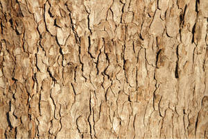 Bark Effect 0612 by w3b-doctor