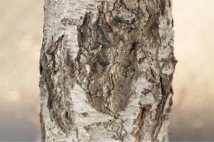 Bark Effect 0624 by w3b-doctor