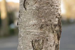 Bark Effect 0625 by w3b-doctor