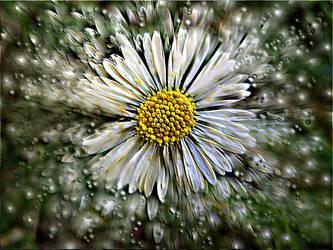 Daisy Rain by nova-images
