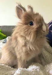 bunny bun bun by Pessaah