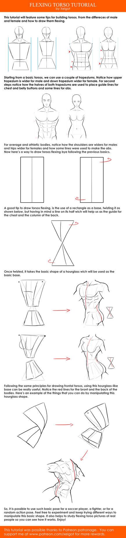 Flexing Torso tutorial by Xelgot
