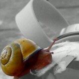 Snail.~ by Potatobadger