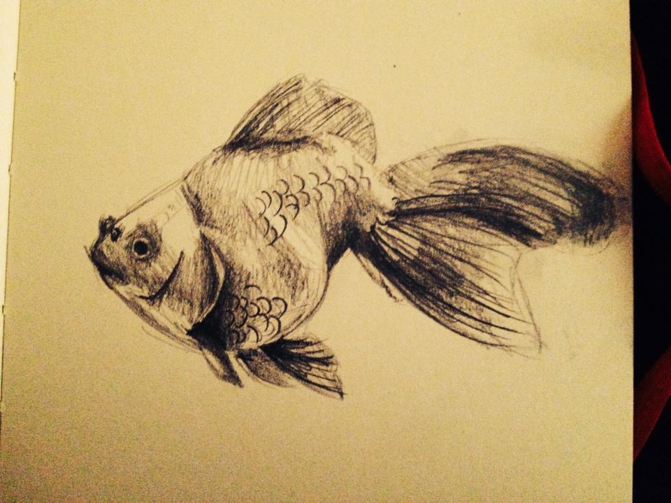 Goldfish by CarnationXXRains