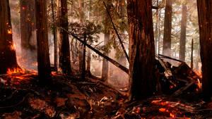 Star Wars Battlefront: Endor Fire Wallpaper