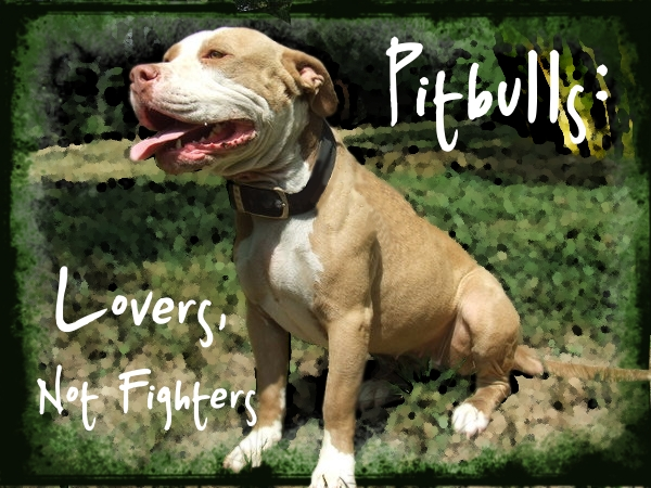 Pitbulls: The Truth by Seraphim-Azriel