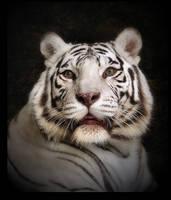 White tiger by Lilia73