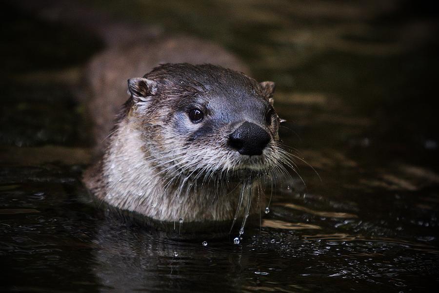 Otter II by Lilia73