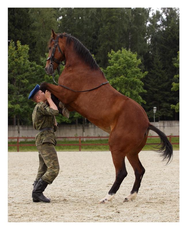 Kremlin horse II by Lilia73